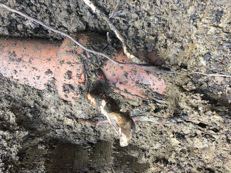 Tree Root Broken Pipe